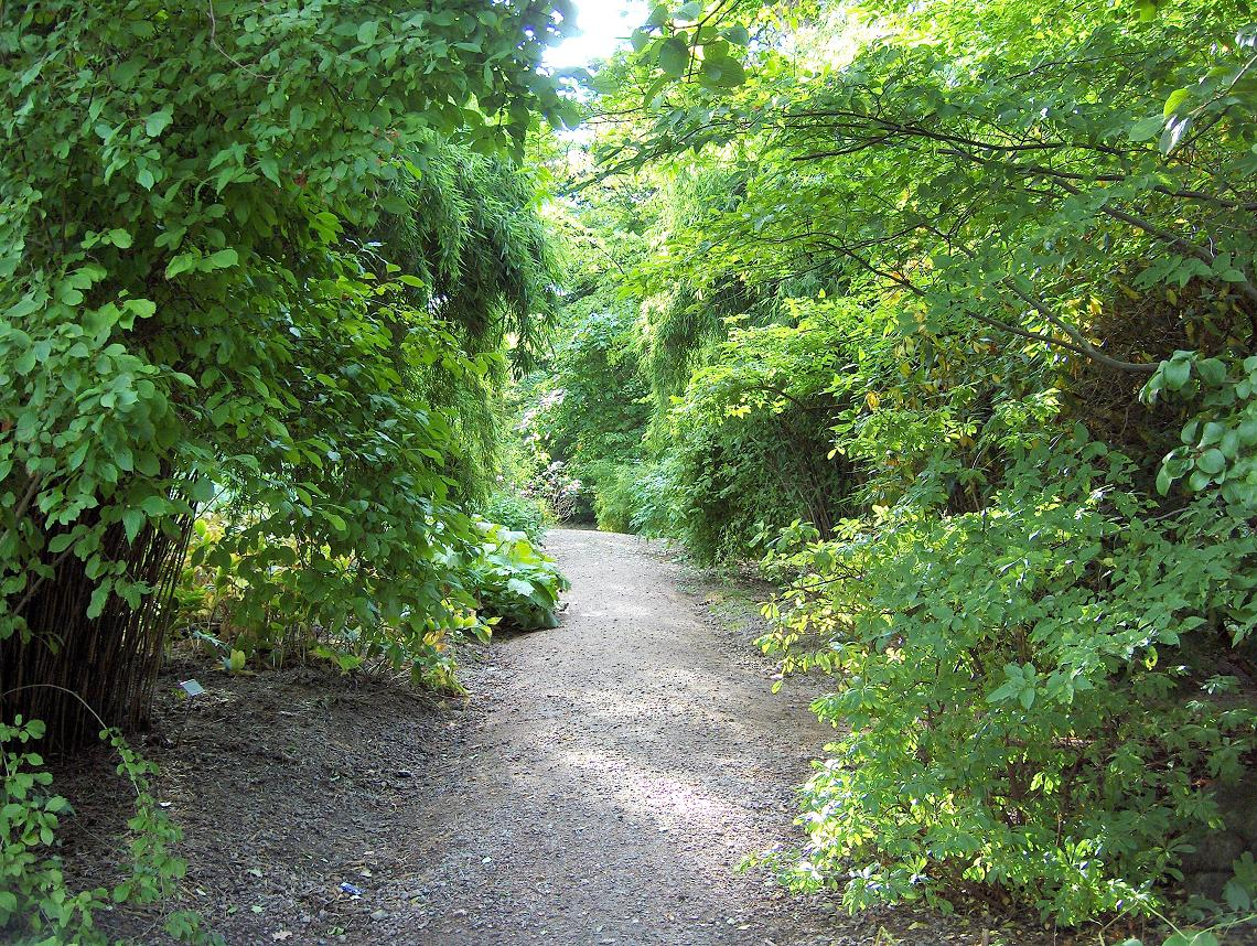 botaniska trädgården göteborg